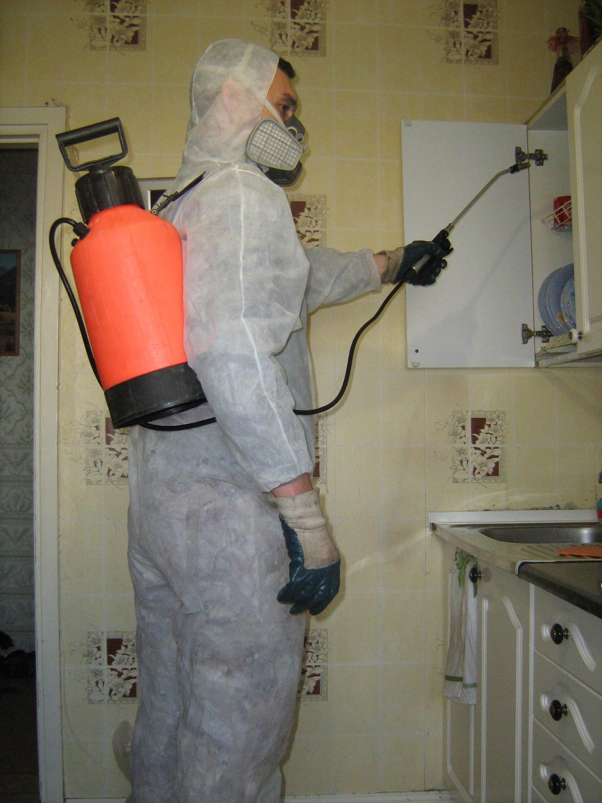 Дезинфекция от мышей в домашних условиях