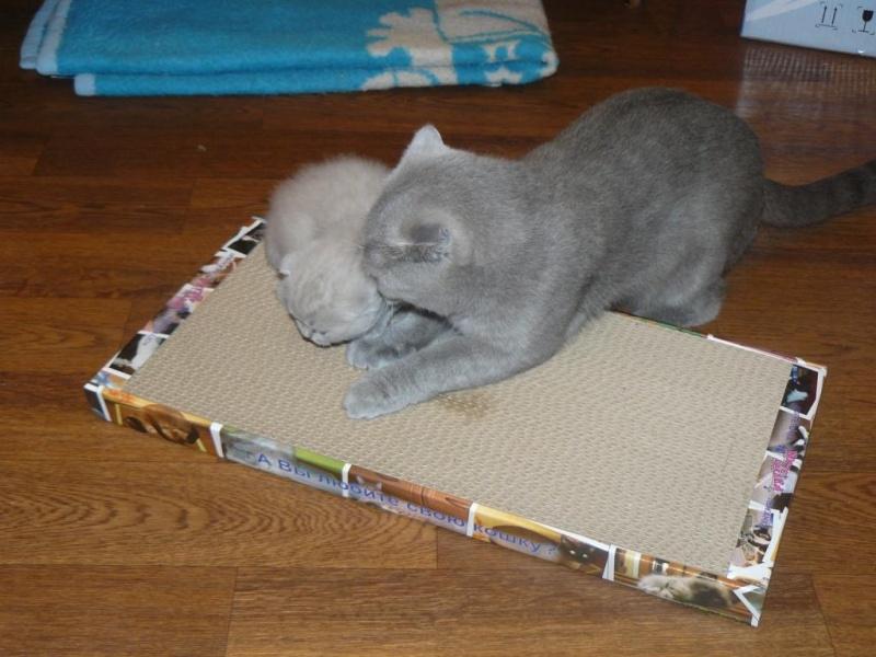 Когтедралка для кошки фото