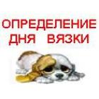 День вязки собаки подскажет многоразовый тест Арбор.
