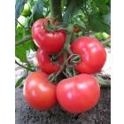 Семена томата KS 14 F1 (Китано)
