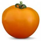 Семена оранжевого томата KS 18 F1 (Китано)