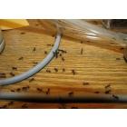 Уничтожение муравьев, избавиться от муравьев,средство от муравьев