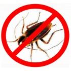 Уничтожить избавится травить УБИТЬ клоп блох муравьи крысы мыши