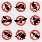 Уничтожить избавится вывести убить клопов блох МУРАВЬИ тараканы - Томск