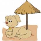 Гостиница для собак передежка собак Пет-Инн.Ру