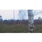 Продаю земельный участок под ИЖС в заповеднике Завидово