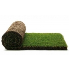Газон. Рулонный газон. Посевной газон