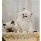 Очаровательные котята!