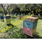 Пчелы, пчелопакеты, пчелосемьи в Санкт-Петербурге