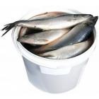 Сельдь солёная Олюторская(крупная, жирная) 5кг/ведро