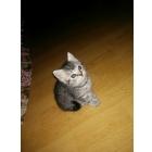 Купите котенка))