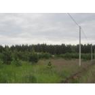 Продаю земельный участок  (дача)