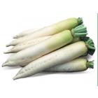 Семена редиса дайкон Титан фирмы Китано