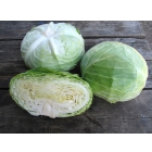 Семена белокочанной капусты Наоми F1 фирмы Китано