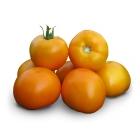 Семена желтого томата KS 17 F1 (Китано)