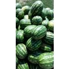 овощи оптом опт от 20 тонн объемы неограниченные