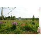 Сдам в аренду или продам сельхозугодья 20ГА в Калужской области