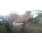 Основатель проекта horsefitness
