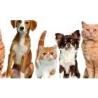 Вызывная ветеринарная служба в Питере и Москве