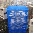 Сетка сушилка для рыбы овощная фруктовая складная 45x45x65 овощесушилка подвесная