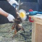 Машинка на дрель перощипальная Фермер НП 01 для ощипа курицы гуся индейки бройлера